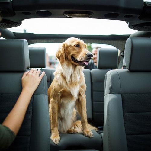 Auto mascota: Cómo viajar con tu mascota de forma segura